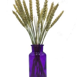 ваза баночка фиолетовая с колосками